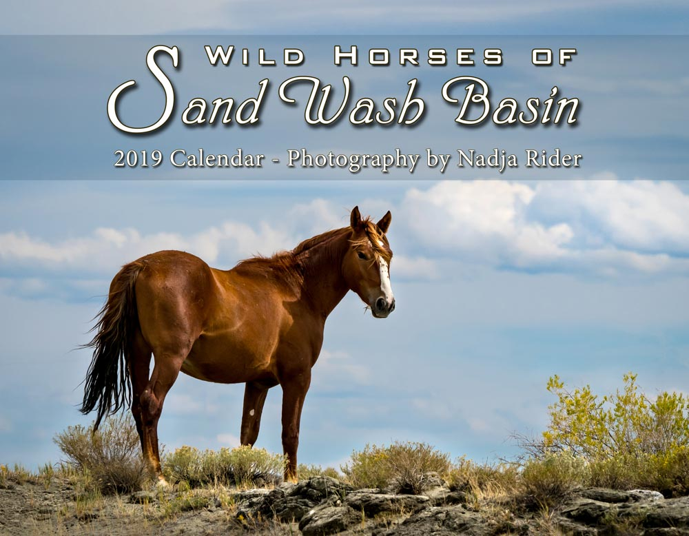 Wild Horses of Sand Wash Basin Wall Calendar